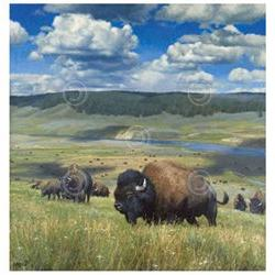 Hayden Wonder Kyle Sims Landscape Wildlife Nature Bison Post